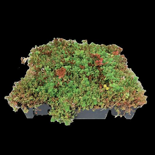 BossCover Green vegetatiemat